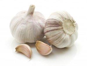 garlic_bulb2[1]